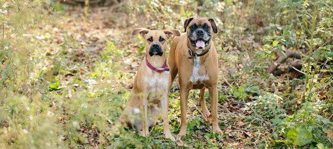 Greenwalks : Doggie Day Care